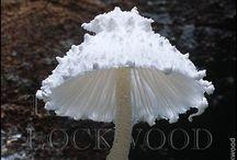Mushrooms \ Fungus