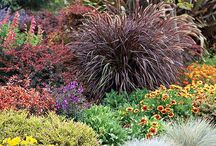 "Xeriscape - Drought Tolerant Landscaping and Grasses / Pronounced as if it began with the letter z, ""xeriscaping"" originated with the Denver Colorado Water Department in 1981. A compound of the Greek xeros, dry, and ""-scape,"" as in landscape, ""xeriscape"" landscaping essentially refers to a creating a landscape design that has been carefully tailored to withstand drought conditions.  This landscaping will make your wallet a little happier when your water bill arrives, too!"