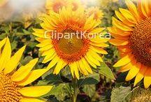 Photo - 클립아트코리아 / 사진, 합성이미지, 디자인, PSD,  포토샵,  design, photoshop, photo, composite image