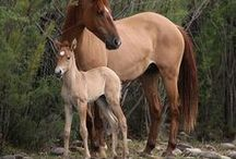 Wild Horses / Stunning visuals to remind the U.S. the value and beauty of the country's wild horses.