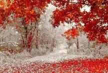 Seasons / by Shan Octavio