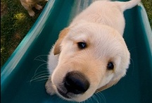 Mascotas y animales / No lo podemos evitar. Nos gustan. Nos encantan / by CasaSpain.com