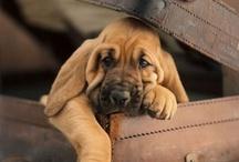 Para viajar con mascota / by CasaSpain.com
