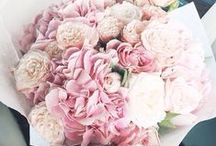 fragile petals.