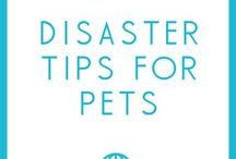 Pet Disaster Preparedness / Tips for making sure your pets are safe in the event of a natural disaster or evacuation.