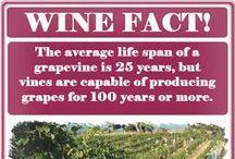 Fun Wine Facts