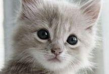 Zwierzęta :3 / O słodkich zwierzątkach