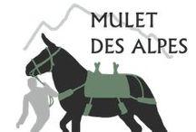 MULETS DES ALPES