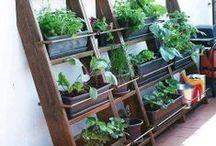 Garden DIY & How-To / Creative ideas for your garden that you can do yourself!