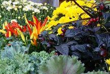 Fall Plants & Decorations