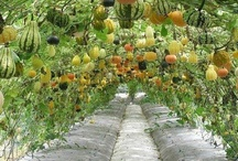 Garden: Decorating, with Mother Earth / Gardening ideas for taking over your own food production. / by Sulinar .