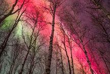 ~La nature incroyable~