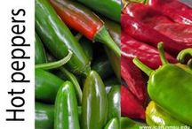 New Mexican cuisine & more / Our unique cuisine. Great recipes and ideas from New Mexico. New Mexico landscapes & more. / by NMSU Ideas for Cooking and Nutrition