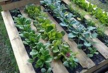 Garden / This Board is for beginner organic gardeners. Hope you enjoy!
