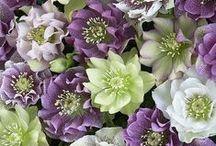 [F] Gorgeous Flowers & Plant