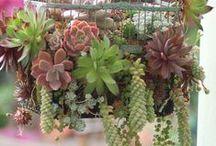 plante/pots