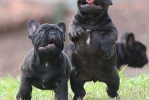 My Puppies / www.canilhoufjodre.com.br