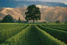 vineyards & fav nz wines