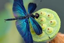 butterfly & dragonfly