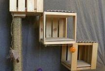 DIY Cat Crafts & Recipes / DIY Cat Crafts & Recipes