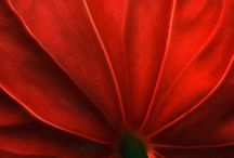 Color me red / Colors red inspiration photos ideas