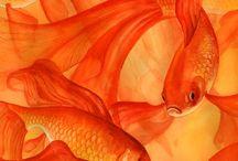 Color me orange / Color colors photos illustrations inspiration