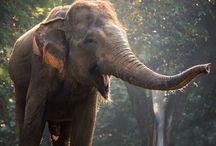 Elephants / Elephants, photos, pictures, art, sculpture, quotes