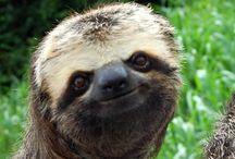 Animal smiles / Cute, feel good, cozy, animals, happy feelings