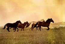 We all want to run with the horses