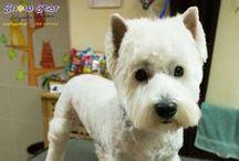 Psi Fryzjer Snow Star galeria / Galeria zdjęć Psi Fryzjer Snow Star
