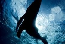 under the sea / sea