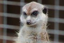 Tiere / Ein paar tierische Bilder