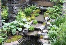 Garden/Gardening / Landscaping and Gardening