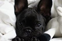 ▹ BABY DOG