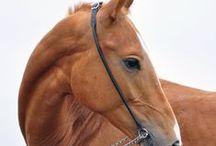 Horses - head photo shot