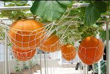 Garden - Fruit & Veg