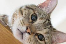 CATS / Cats