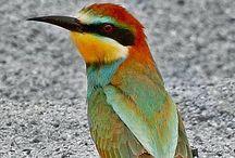 .....BIRDS..... / Birds