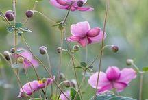 Haveinspiration / Blomster og andre smukke ting, jeg drømmer om i min have
