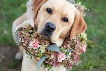 Pets love in your wedding