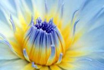 FLOWER BEAUTY...