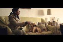 Behaviour Modification videos / Videos of behaviour modification techniques with animals. Techniques based on non aversive qand force free techniques