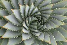 We ♥ Succulents / Son una debilidad, bonitas, fáciles de cuidar y muy decorativas. Ínspirate para darle un toque a tu hogar y a cualquier EVENTO