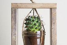 ♥ Cactus ♥