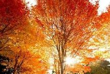 Rainy, colorful and falling / Autumn / Automne