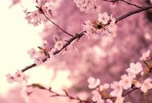 Flowery, colorful and pretty / Spring / Printemps