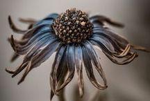 Art - Flower Photo -