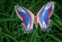 Butterflies / Just when the caterpillar thought it would die a Butterfly was born…..