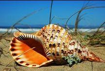 Seashells / Seashells
