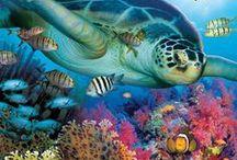 Sea life / Sea life